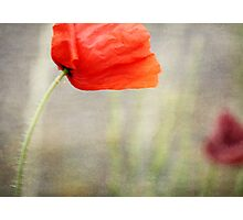 And we shall remember them....... Photographic Print
