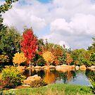 Colorful Fall by NancyC