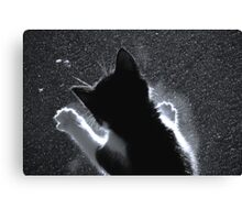 Kitten Chasing Snowflakes Canvas Print