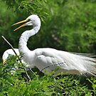 Gathering Branches To Repair The Nest by Kathy Baccari