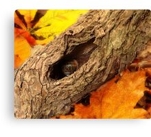 A Snail's Autumn House Canvas Print