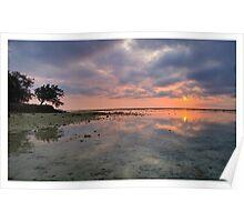 Heron Afternoon Gold -  Heron Island Resort - Australia Poster