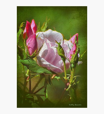 Textured Pink Rose & Buds Photographic Print