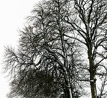 Trees in the Snow, Petworth by Emma S