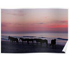 Assateague Sunrise Poster