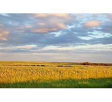 Wheat Field - Grande Prairie, Alberta Photographic Print
