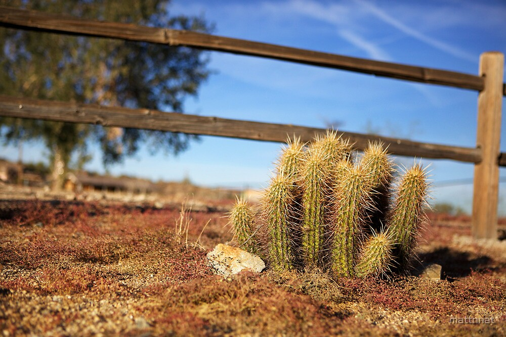 Cactus - Arizona by mattnnat