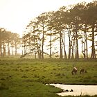 Assateague Ponies - Chincoteague Virginia by mattnnat