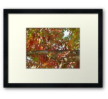 Squirrel on the limb 2 Framed Print