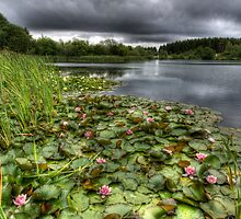 Summer Lilies by David Tinsley