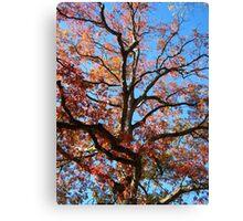 Oak 2 Canvas Print