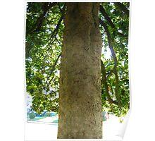 Magnolia Tree 2 Poster