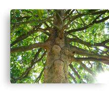 Magnolia Tree 3 Canvas Print
