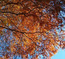 Firetree by dge357