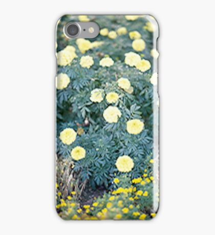 Yellow Flowers... iPhone Case/Skin