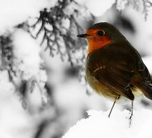 Robin Red Breast by Emma Turner