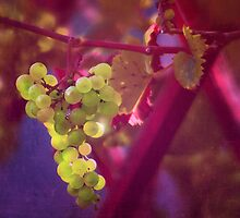 Grapes by ♛ VIAINA