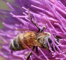 Pollenation by Alila Hofmeyr