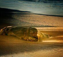 Moonstone Beach Rock at Sunrise by socalgirl
