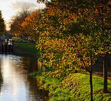 Grand Canal in autumn, Dublin, Ireland by Andrew Jones