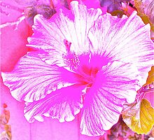 Hot Pink Hibiscus by Christine Chase Cooper