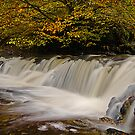 Campsie Glen by Chris Cherry