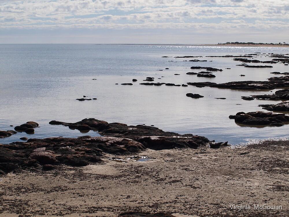 Stromatolites Hamlin Pool ,Shark Bay Western Australia  by Virginia  McGowan