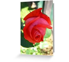 November Rose 3 Greeting Card