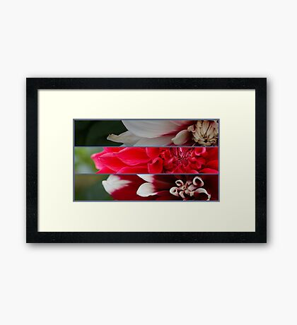 French pink and red flowers composition Framed Print