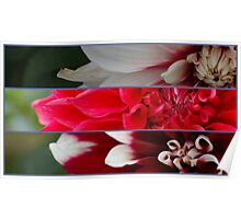 French pink and red flowers composition Poster