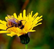 Bumblebee by Jessica Karran