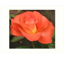 Perfect Fall Rose Art Print