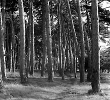 Cluster Of Trees, Phoenix Park by Dave  Kennedy