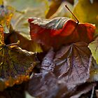 5 ★★★★★ . Fabulous , just wonderful and fabulous ! I do LOVE you AUTUMN . by Brown Sugar . Views (144) favorited by (3) thank you ! by AndGoszcz