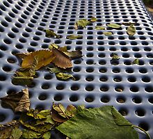 Autumn Bench by Sharlene Rens