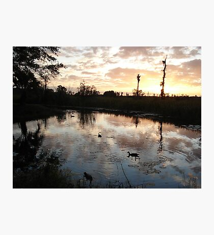 SUNSET WITH MUSCOVIES (ECONFINA CREEK, FL) Photographic Print