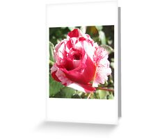 'Sentimental' Rose Greeting Card