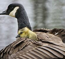 A Mother's Love by Heather King