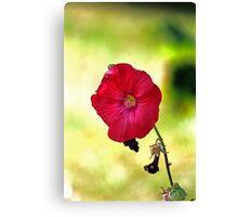 Mallow Flower Canvas Print