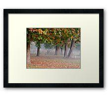 Freddie in a misty park Framed Print