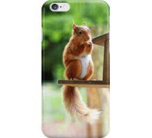 Red Squirrel iPhone Case/Skin