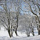 Cwm in snow by Jane Corey