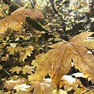 Autumn Glow by Sarah Trent