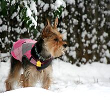Dog in the Snow by gigigriffis