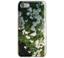 White Tea Roses... iPhone Case/Skin