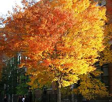 Bronx beauty, New York City Autumn by Alberto  DeJesus