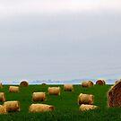 Calgary Hay Bales by Rick Louie