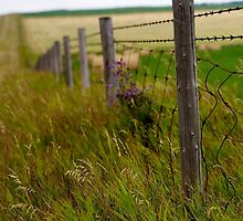 The Fence Post by Rick Louie