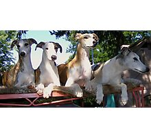Whippet Party Photographic Print