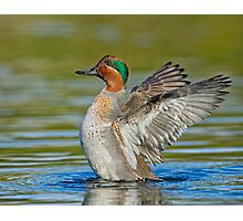 Wing flapping teal Photographic Print